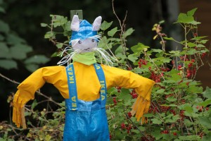 scarecrow-snatch